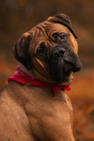 Huntington Pet Photographer NY
