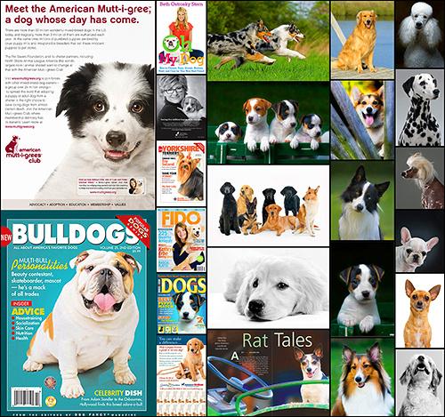 Long Island Suffolk NY Pet Photography